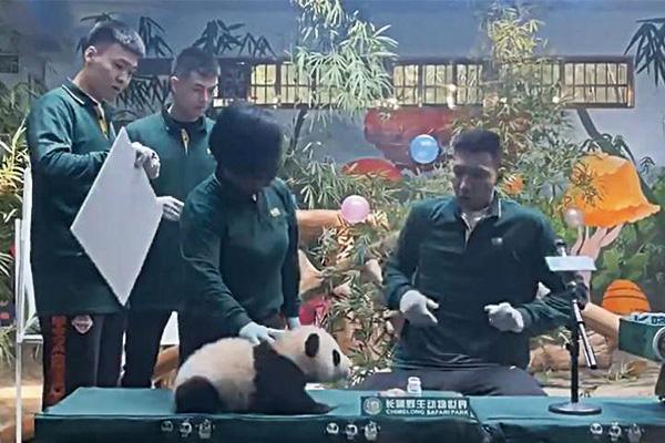 易建联被熊猫吓到是什么节目?易建联被熊猫吓到是怎么回事?