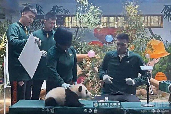 易建联被熊猫吓到